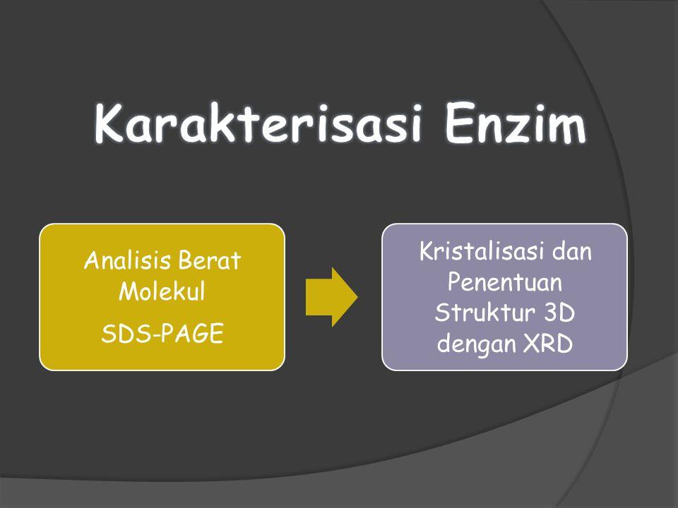 Karakterisasi Enzim Analisis Berat Molekul SDS-PAGE