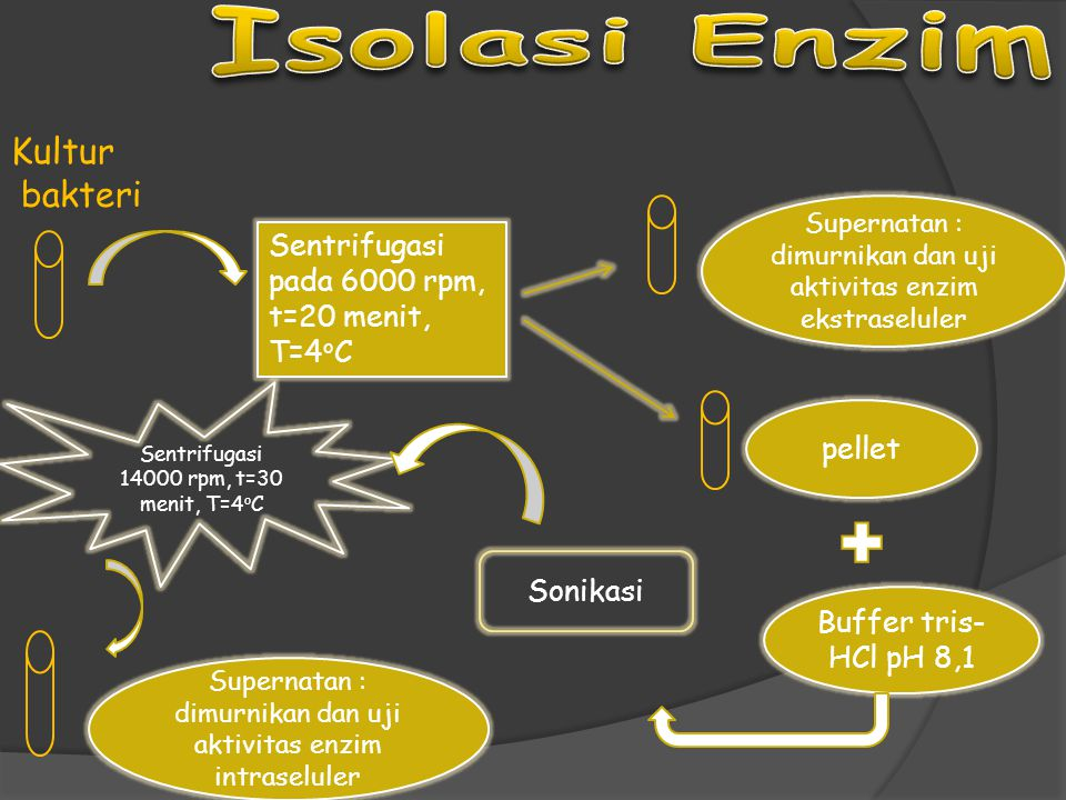 Isolasi Enzim Kultur bakteri