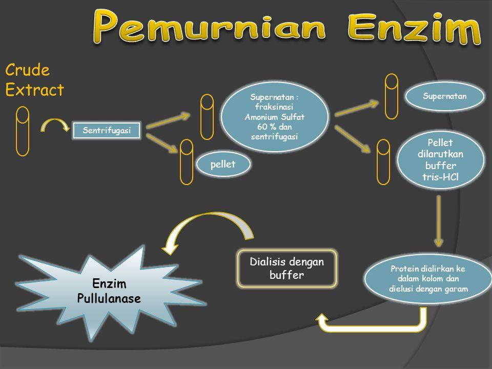 Pemurnian Enzim Crude Extract Enzim Pullulanase Dialisis dengan buffer