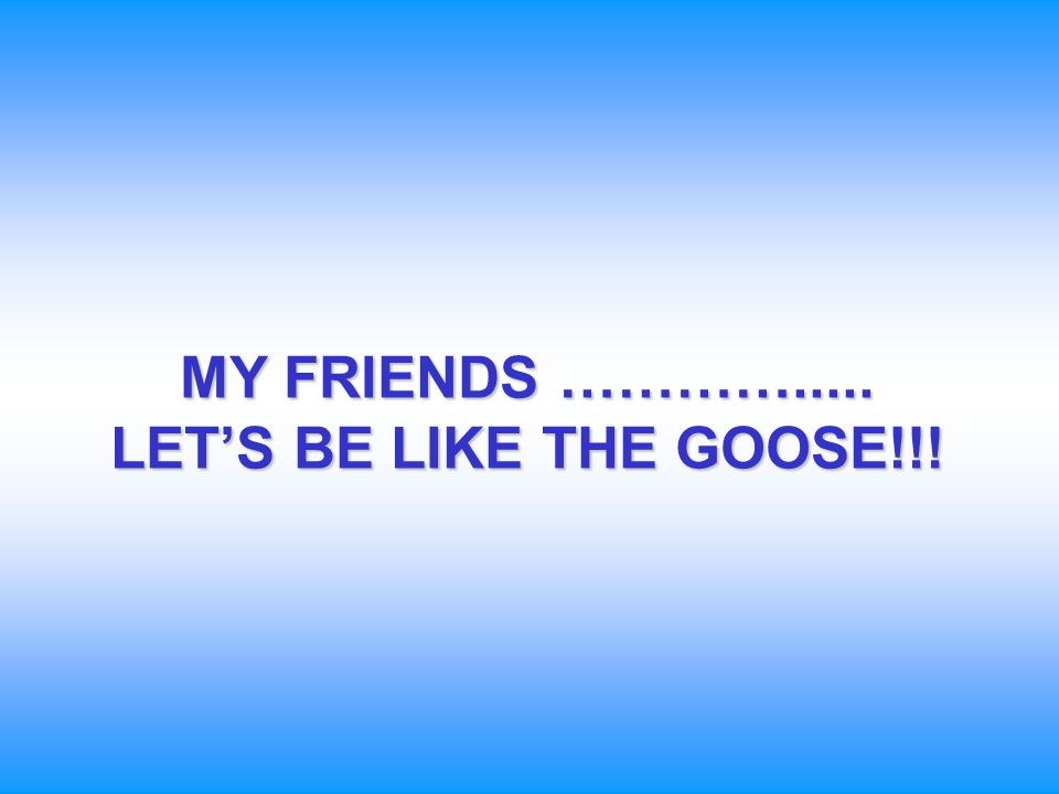 MY FRIENDS …………..... LET'S BE LIKE THE GOOSE!!!