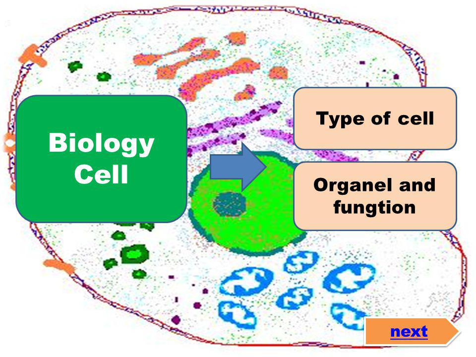 Type of cell Organel and fungtion Biology Cell next