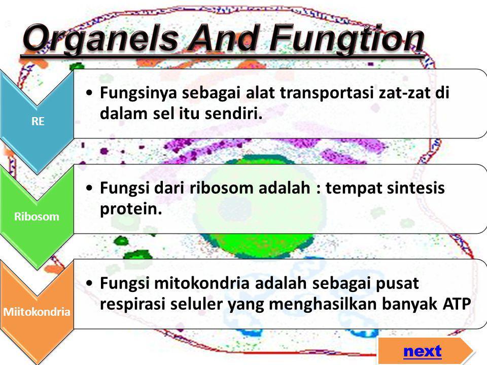 Organels And Fungtion RE. Fungsinya sebagai alat transportasi zat-zat di dalam sel itu sendiri. Ribosom.