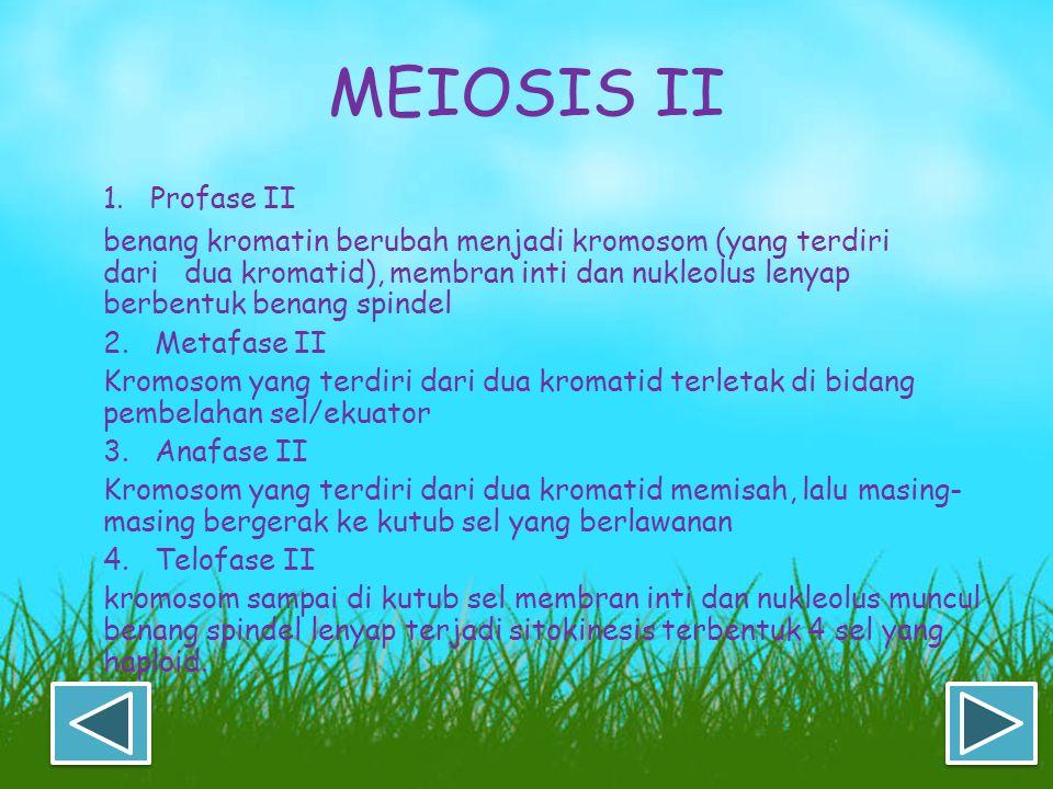 MEIOSIS II 1. Profase II.
