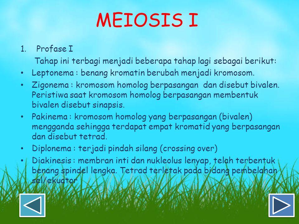 MEIOSIS I 1. Profase I. Tahap ini terbagi menjadi beberapa tahap lagi sebagai berikut: Leptonema : benang kromatin berubah menjadi kromosom.
