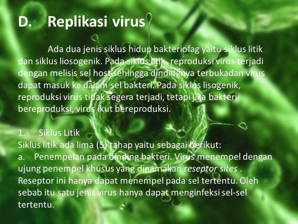 D. Replikasi virus Ada dua jenis siklus hidup bakteriofag yaitu siklus litik dan siklus liosogenik.