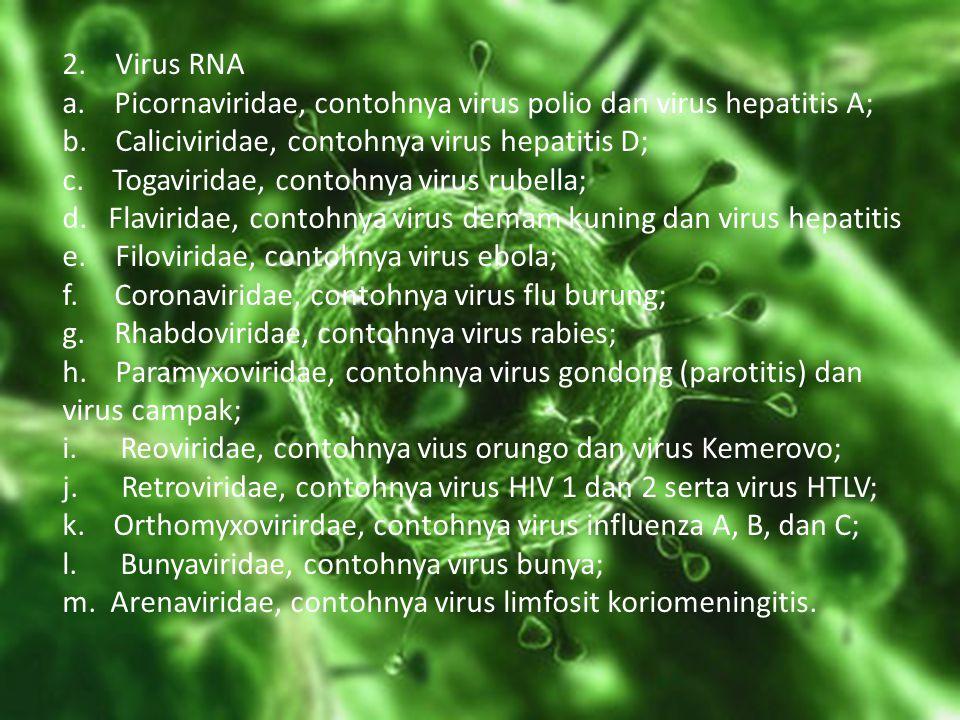2. Virus RNA a. Picornaviridae, contohnya virus polio dan virus hepatitis A; b. Caliciviridae, contohnya virus hepatitis D; c. Togaviridae, contohnya virus rubella; d. Flaviridae, contohnya virus demam kuning dan virus hepatitis e. Filoviridae, contohnya virus ebola; f. Coronaviridae, contohnya virus flu burung; g. Rhabdoviridae, contohnya virus rabies; h. Paramyxoviridae, contohnya virus gondong (parotitis) dan virus campak; i. Reoviridae, contohnya vius orungo dan virus Kemerovo; j. Retroviridae, contohnya virus HIV 1 dan 2 serta virus HTLV; k. Orthomyxovirirdae, contohnya virus influenza A, B, dan C; l. Bunyaviridae, contohnya virus bunya; m. Arenaviridae, contohnya virus limfosit koriomeningitis.