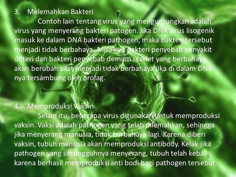 3. Melemahkan Bakteri Contoh lain tentang virus yang menguntungkan adalah virus yang menyerang bakteri patogen.