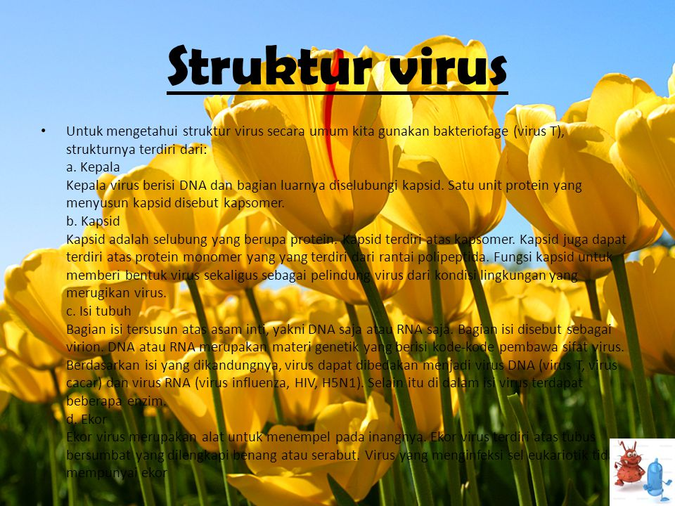 Struktur virus