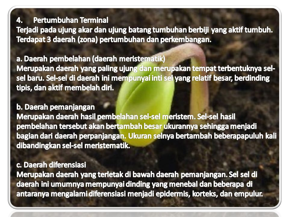 4. Pertumbuhan Terminal
