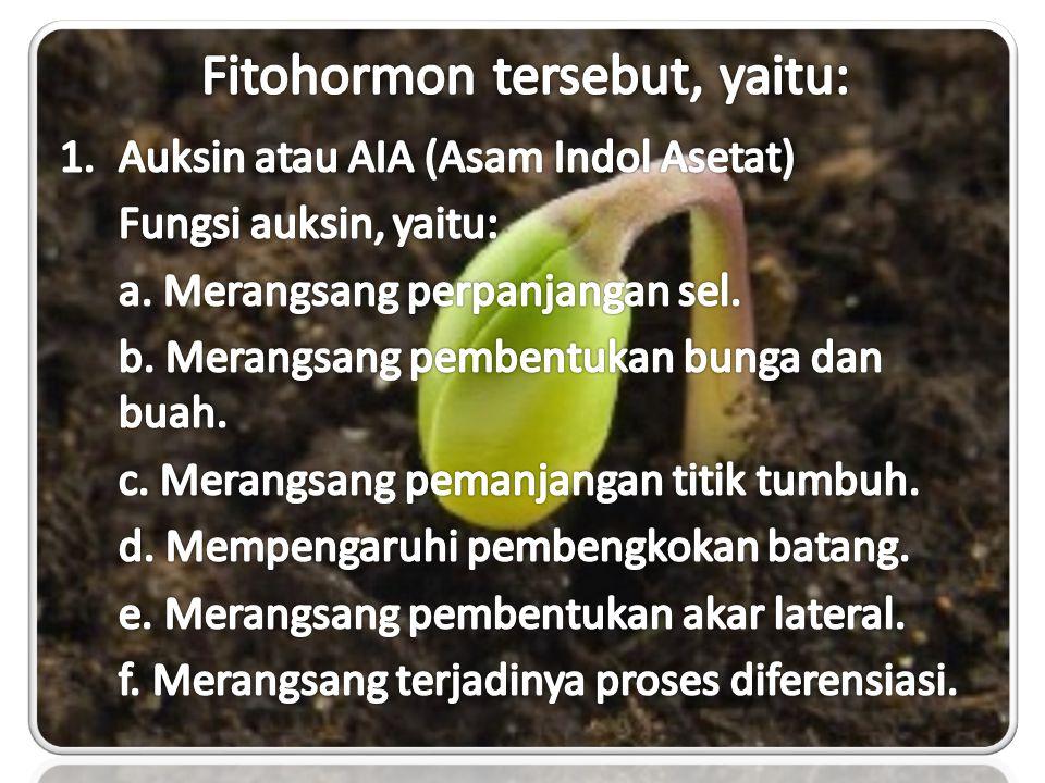 Fitohormon tersebut, yaitu:
