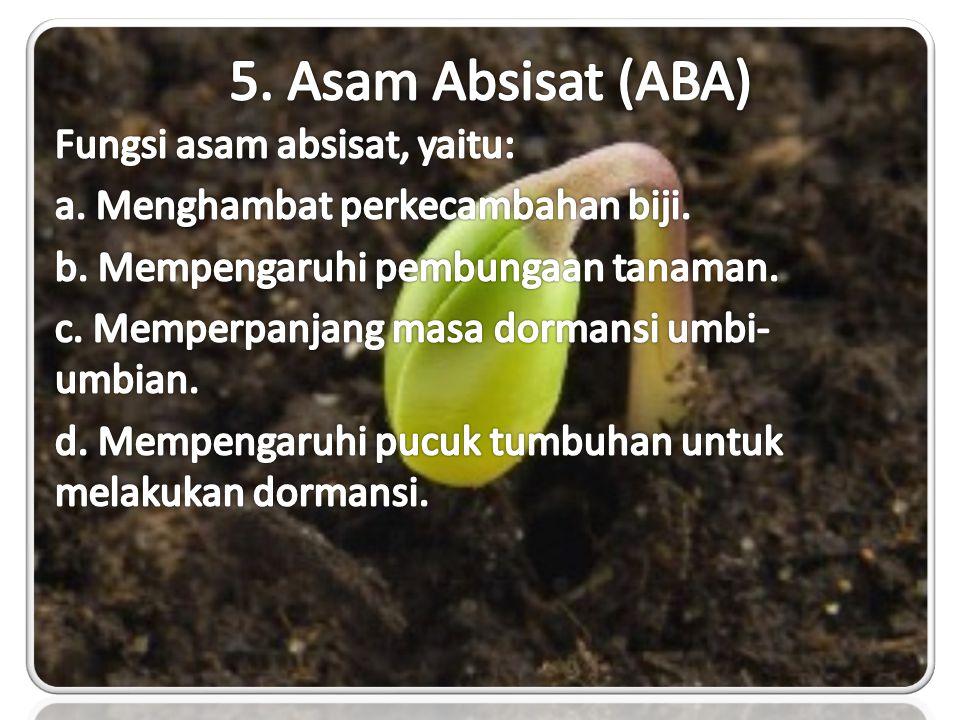 5. Asam Absisat (ABA) Fungsi asam absisat, yaitu: