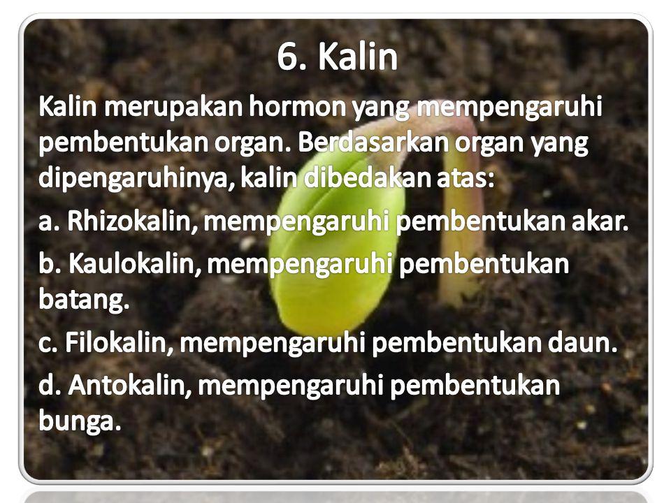 6. Kalin Kalin merupakan hormon yang mempengaruhi pembentukan organ. Berdasarkan organ yang dipengaruhinya, kalin dibedakan atas: