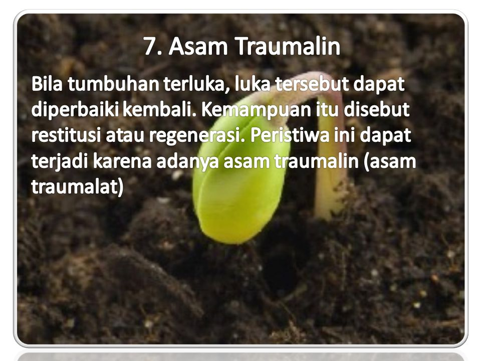 7. Asam Traumalin