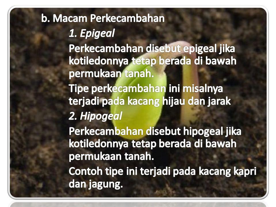 b. Macam Perkecambahan 1. Epigeal. Perkecambahan disebut epigeal jika kotiledonnya tetap berada di bawah permukaan tanah.