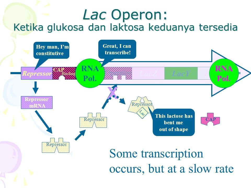 Lac Operon: Ketika glukosa dan laktosa keduanya tersedia