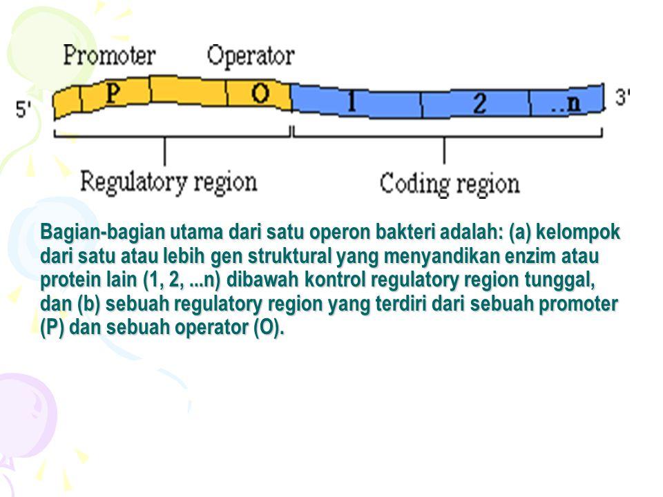 Bagian-bagian utama dari satu operon bakteri adalah: (a) kelompok dari satu atau lebih gen struktural yang menyandikan enzim atau protein lain (1, 2, ...n) dibawah kontrol regulatory region tunggal, dan (b) sebuah regulatory region yang terdiri dari sebuah promoter (P) dan sebuah operator (O).