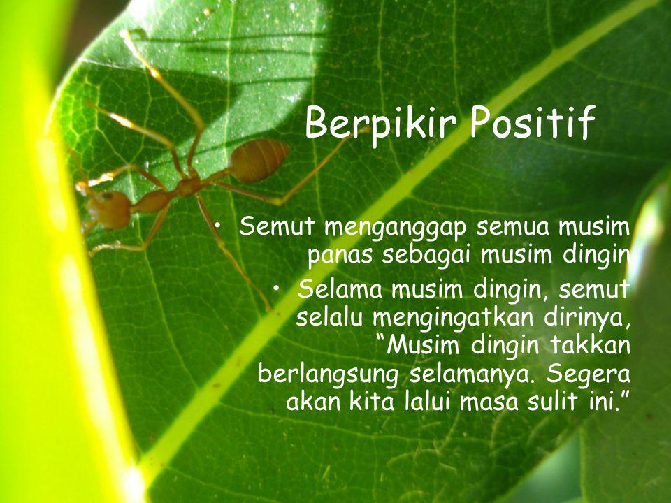 Berpikir Positif Semut menganggap semua musim panas sebagai musim dingin.