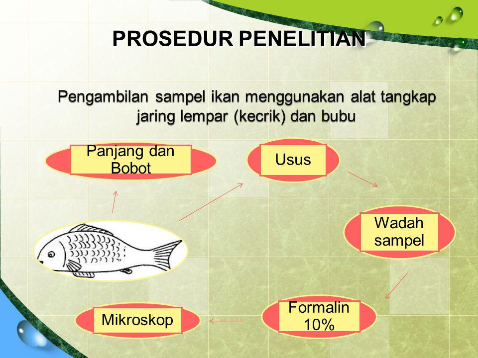 PROSEDUR PENELITIAN Pengambilan sampel ikan menggunakan alat tangkap jaring lempar (kecrik) dan bubu.