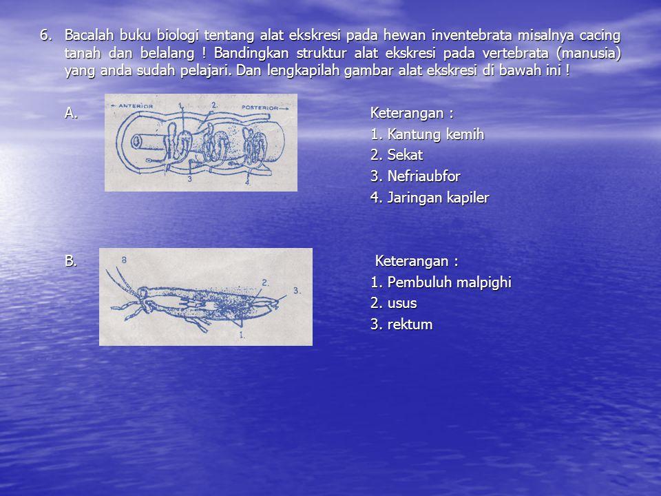 6. Bacalah buku biologi tentang alat ekskresi pada hewan inventebrata misalnya cacing tanah dan belalang ! Bandingkan struktur alat ekskresi pada vertebrata (manusia) yang anda sudah pelajari. Dan lengkapilah gambar alat ekskresi di bawah ini !