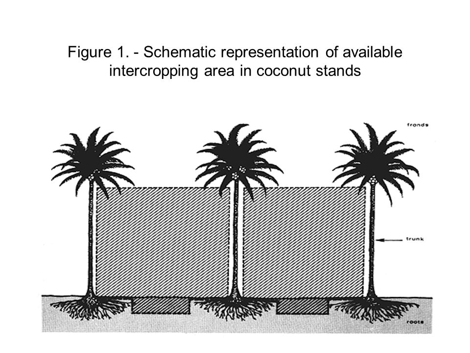 Figure 1. - Schematic representation of available intercropping area in coconut stands