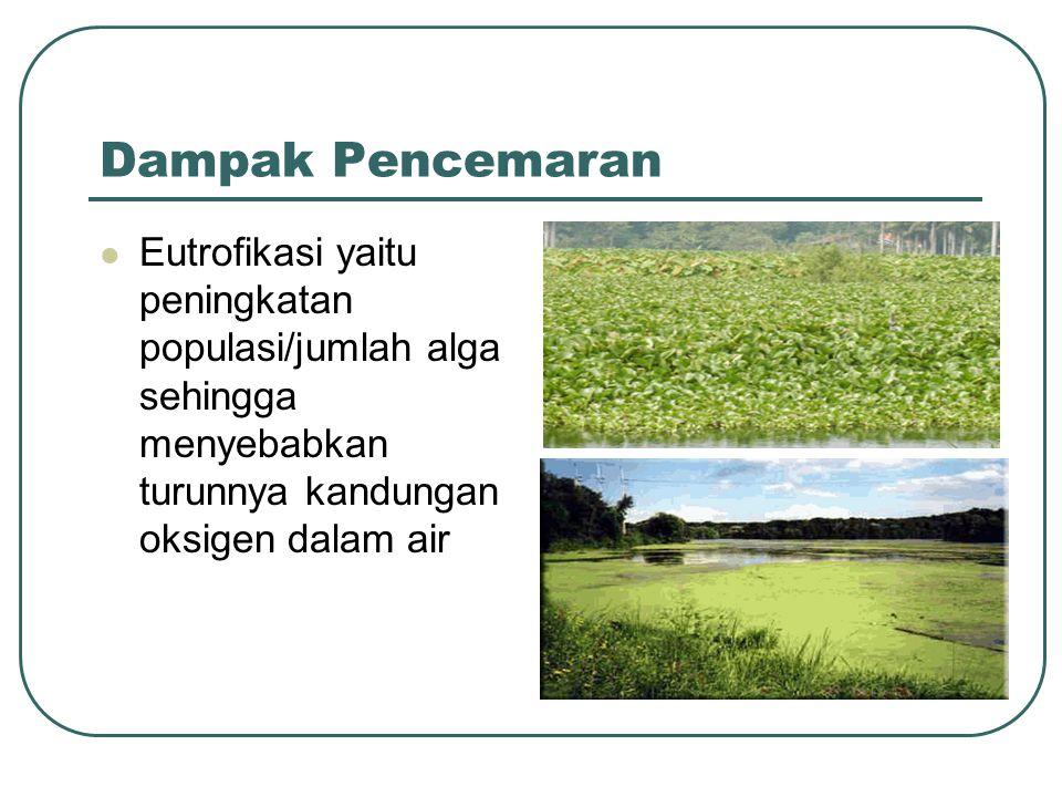 Dampak Pencemaran Eutrofikasi yaitu peningkatan populasi/jumlah alga sehingga menyebabkan turunnya kandungan oksigen dalam air.