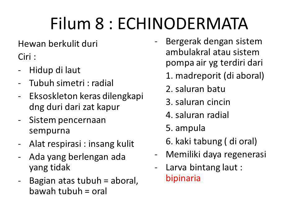 Filum 8 : ECHINODERMATA Bergerak dengan sistem ambulakral atau sistem pompa air yg terdiri dari. 1. madreporit (di aboral)