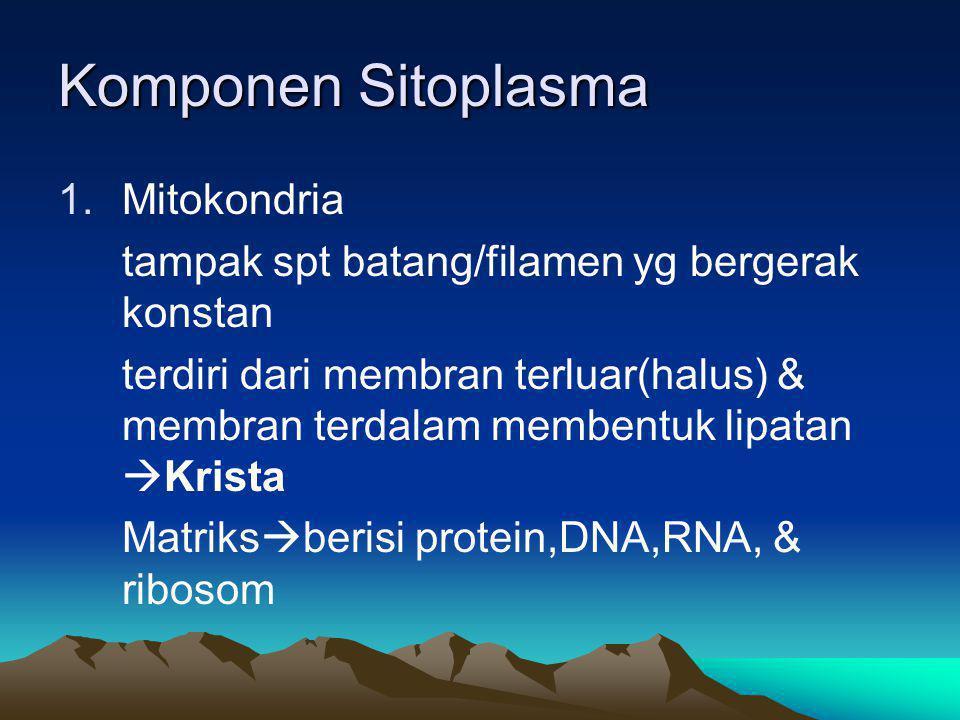 Komponen Sitoplasma Mitokondria