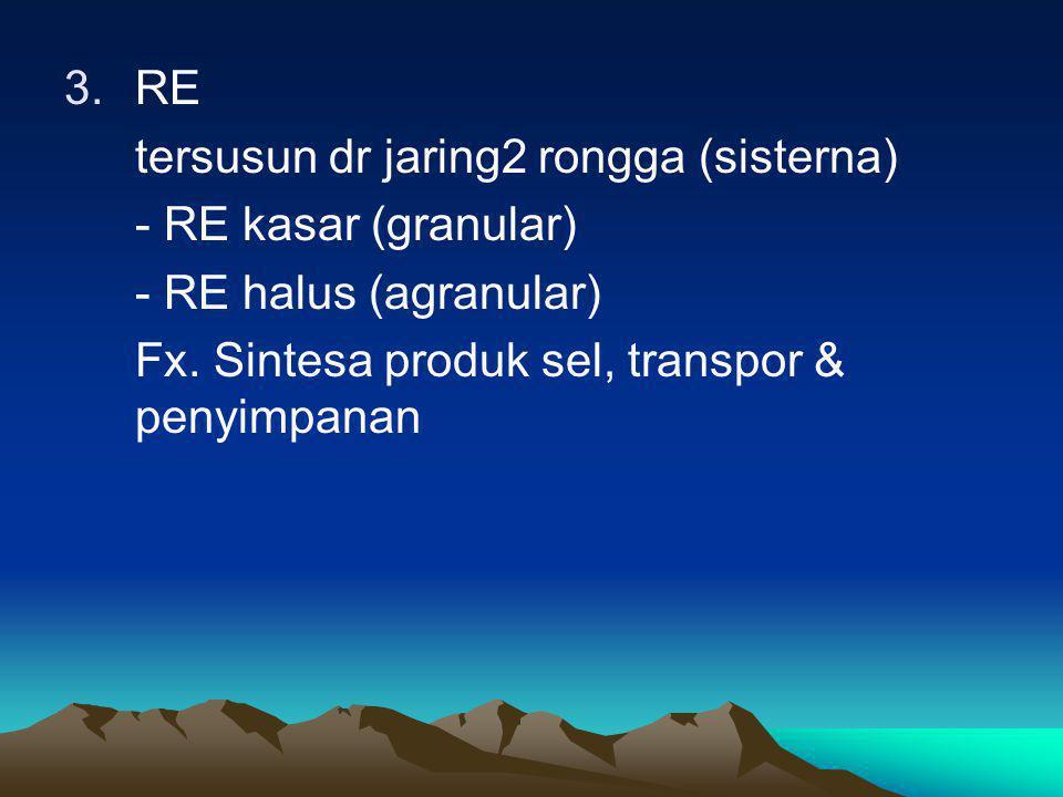 RE tersusun dr jaring2 rongga (sisterna) - RE kasar (granular) - RE halus (agranular) Fx.