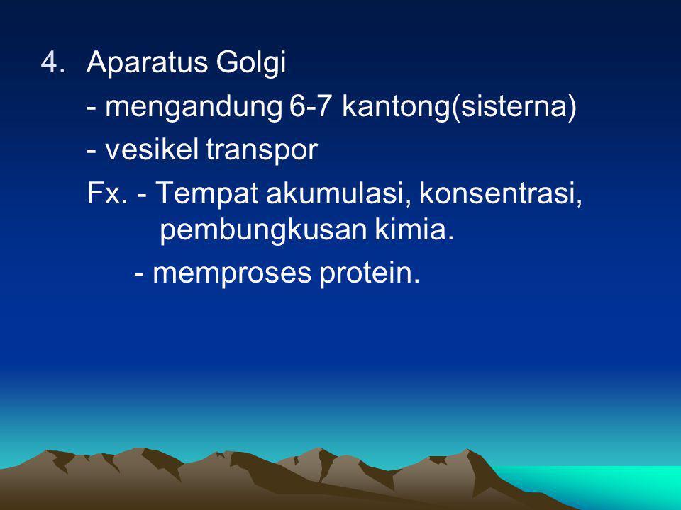 Aparatus Golgi - mengandung 6-7 kantong(sisterna) - vesikel transpor. Fx. - Tempat akumulasi, konsentrasi, pembungkusan kimia.