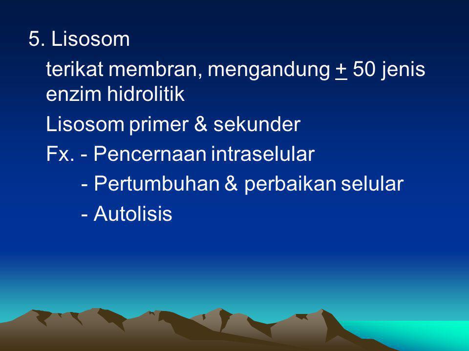 5. Lisosom terikat membran, mengandung + 50 jenis enzim hidrolitik. Lisosom primer & sekunder.