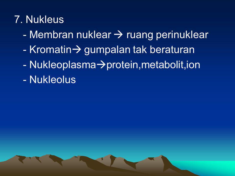 7. Nukleus - Membran nuklear  ruang perinuklear. - Kromatin gumpalan tak beraturan. - Nukleoplasmaprotein,metabolit,ion.