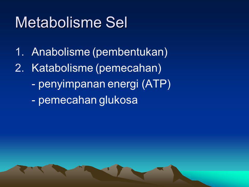 Metabolisme Sel Anabolisme (pembentukan) Katabolisme (pemecahan)