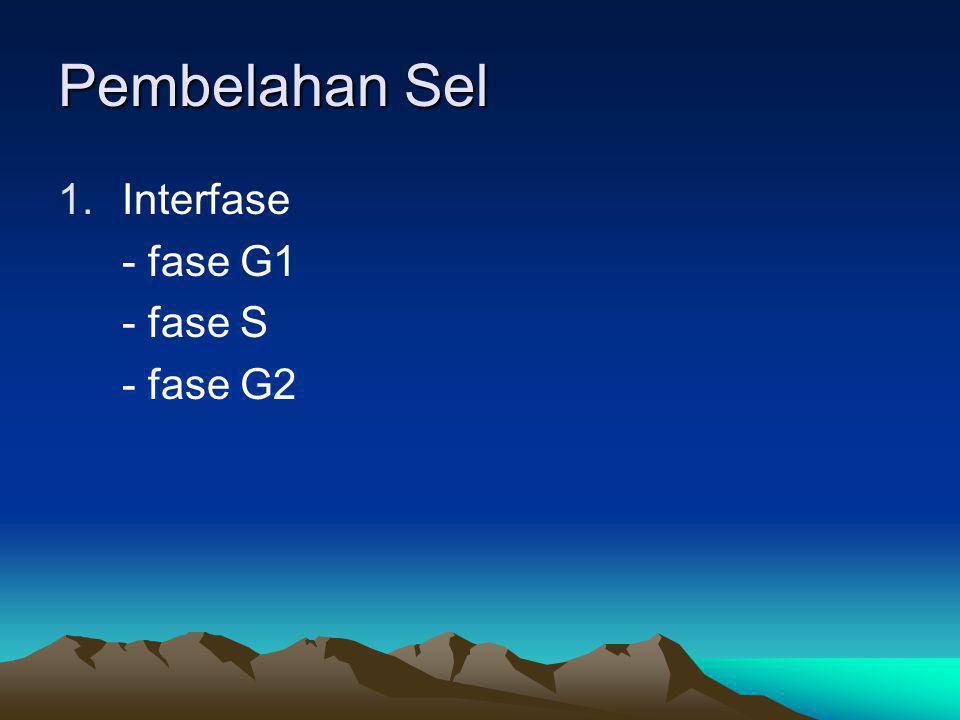 Pembelahan Sel Interfase - fase G1 - fase S - fase G2