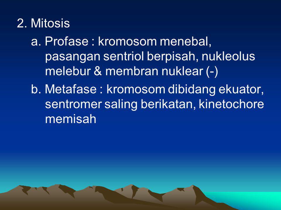 2. Mitosis a. Profase : kromosom menebal, pasangan sentriol berpisah, nukleolus melebur & membran nuklear (-)