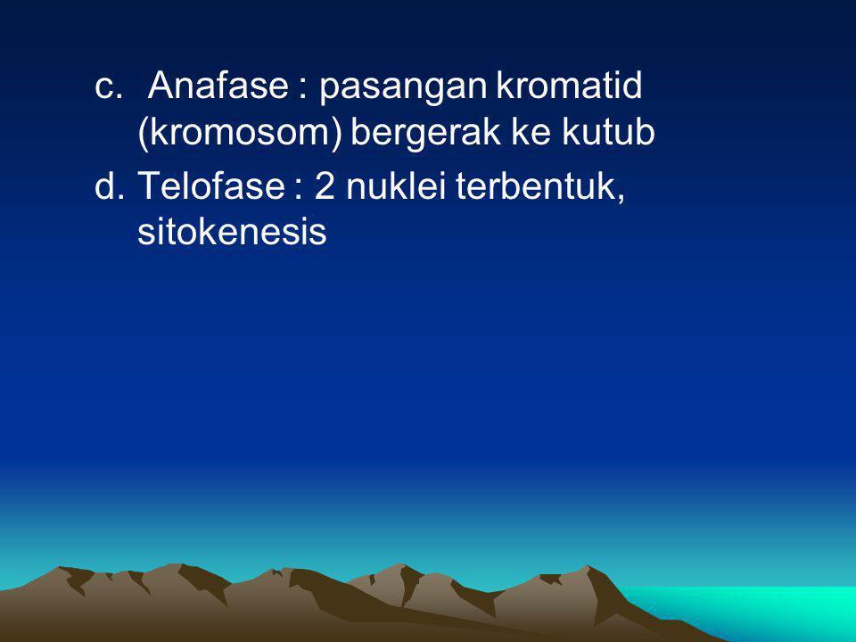 c. Anafase : pasangan kromatid (kromosom) bergerak ke kutub