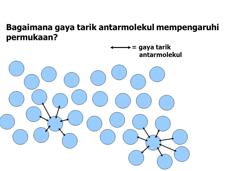 Bagaimana gaya tarik antarmolekul mempengaruhi permukaan