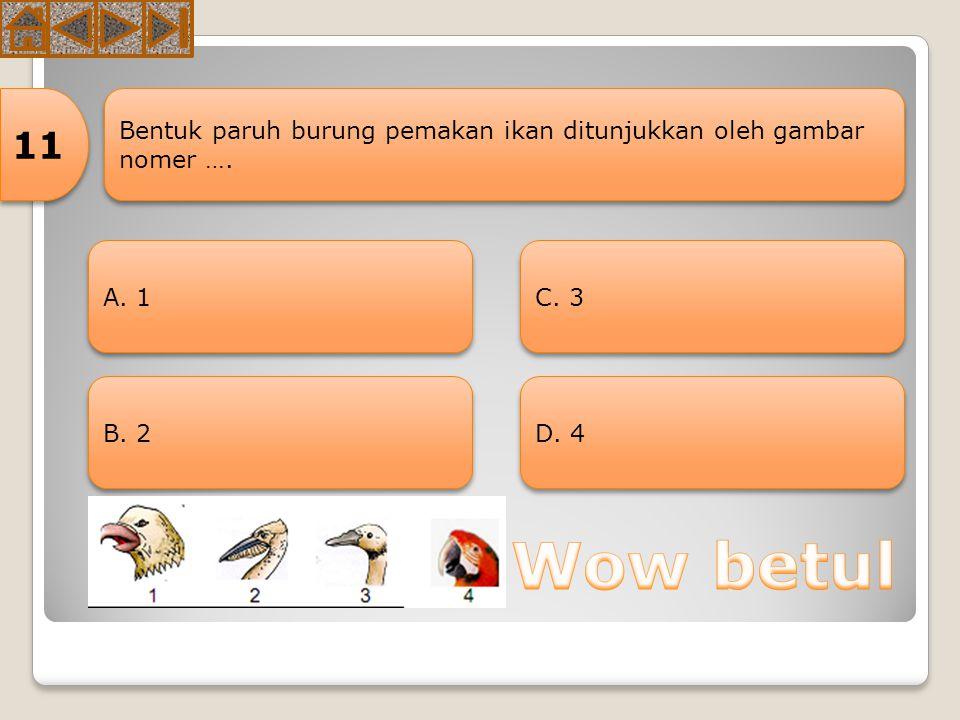 11 Bentuk paruh burung pemakan ikan ditunjukkan oleh gambar nomer …. A. 1 C. 3 B. 2 D. 4 Wow betul