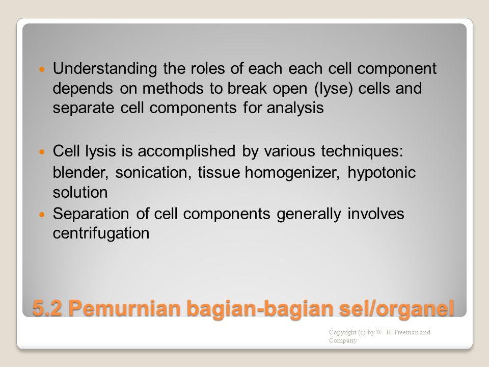 5.2 Pemurnian bagian-bagian sel/organel