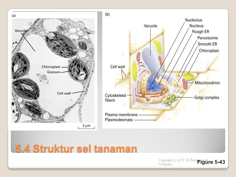 5.4 Struktur sel tanaman Figure 5-43