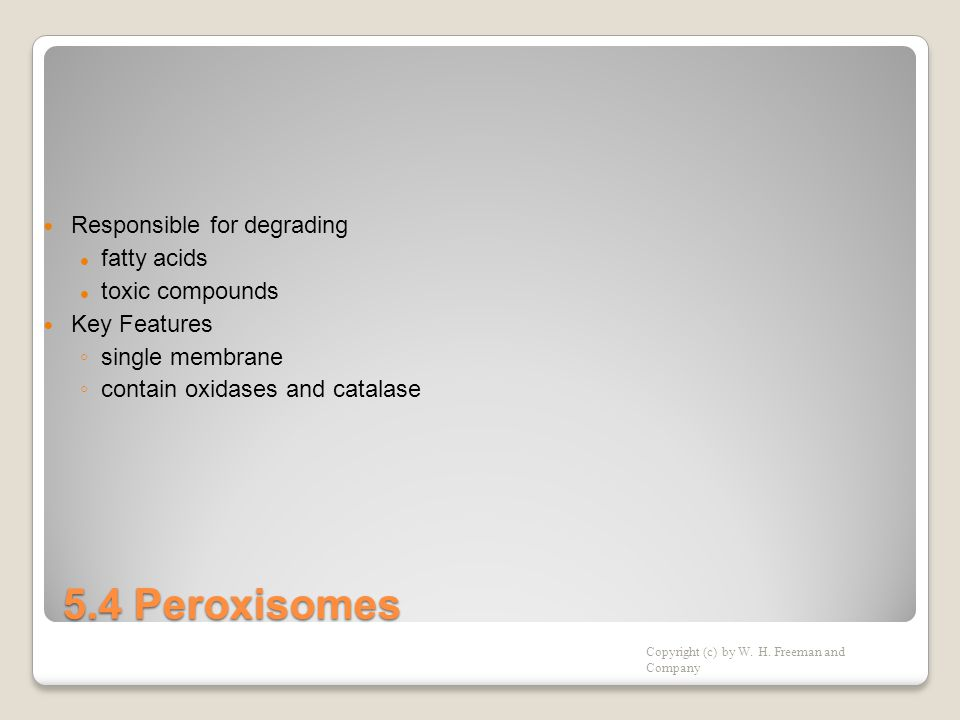 5.4 Peroxisomes Responsible for degrading fatty acids toxic compounds