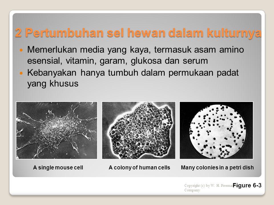 2 Pertumbuhan sel hewan dalam kulturnya