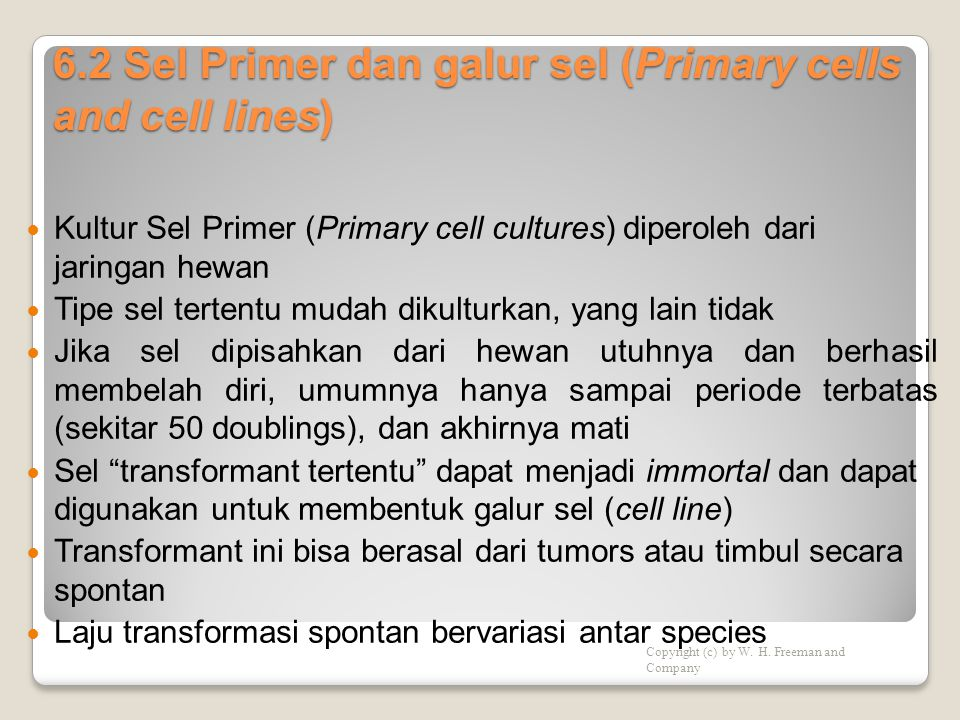 6.2 Sel Primer dan galur sel (Primary cells and cell lines)