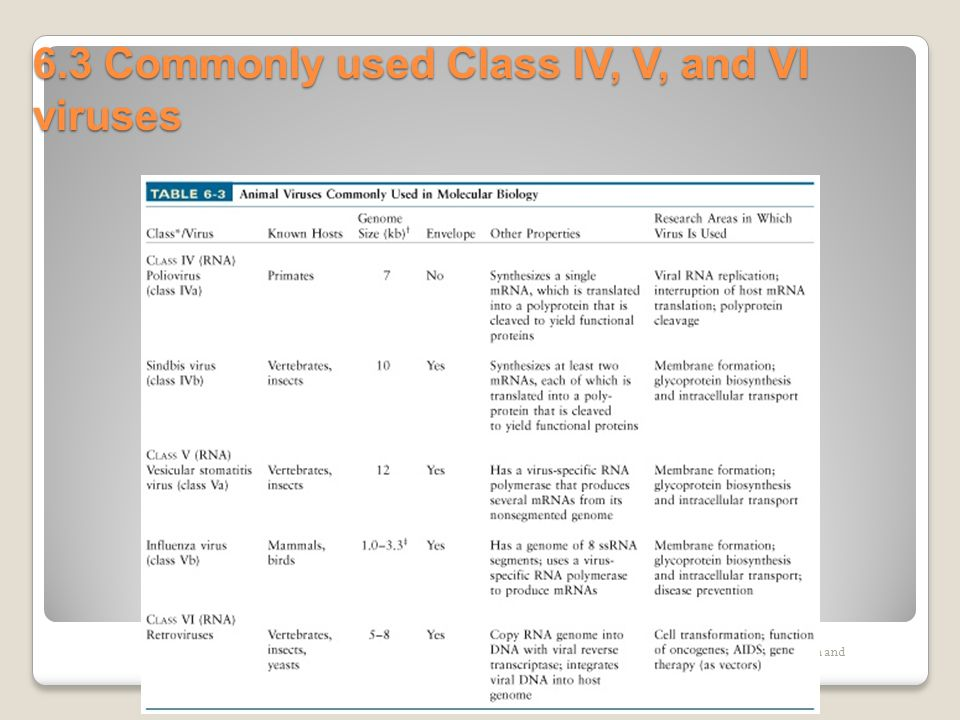6.3 Commonly used Class IV, V, and VI viruses