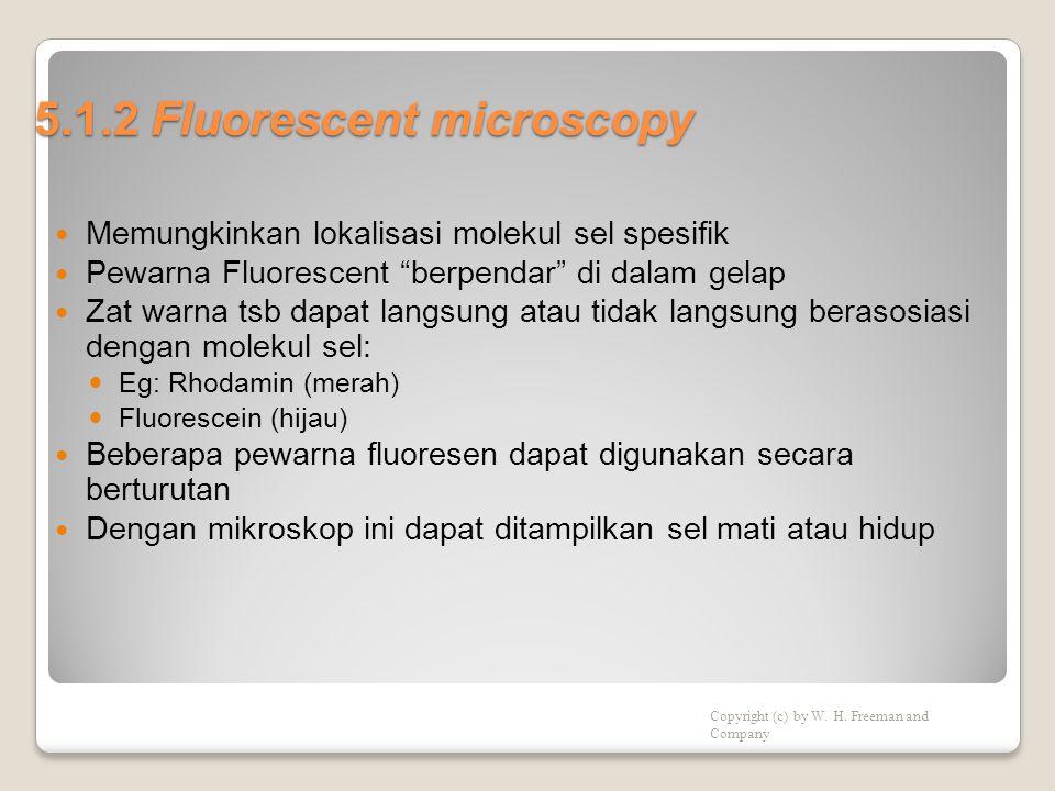 5.1.2 Fluorescent microscopy