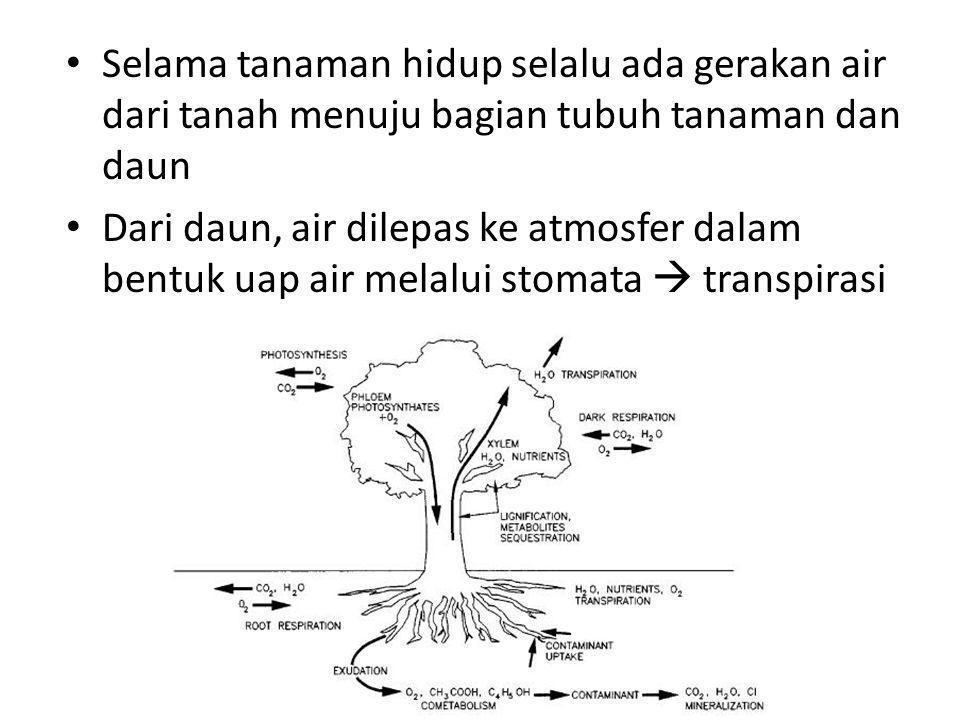 Selama tanaman hidup selalu ada gerakan air dari tanah menuju bagian tubuh tanaman dan daun