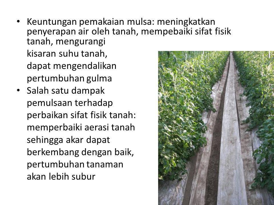 Keuntungan pemakaian mulsa: meningkatkan penyerapan air oleh tanah, mempebaiki sifat fisik tanah, mengurangi