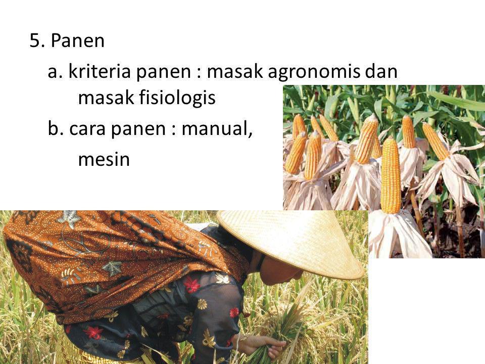 5. Panen a. kriteria panen : masak agronomis dan masak fisiologis b