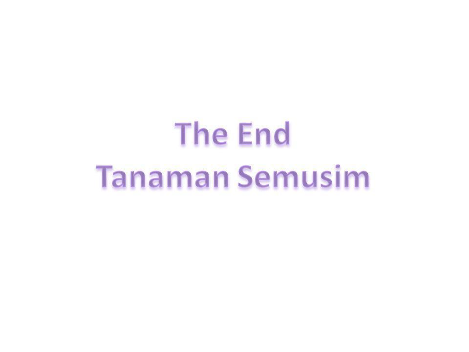 The End Tanaman Semusim