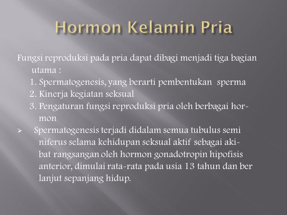 Hormon Kelamin Pria Fungsi reproduksi pada pria dapat dibagi menjadi tiga bagian utama : 1. Spermatogenesis, yang berarti pembentukan sperma.