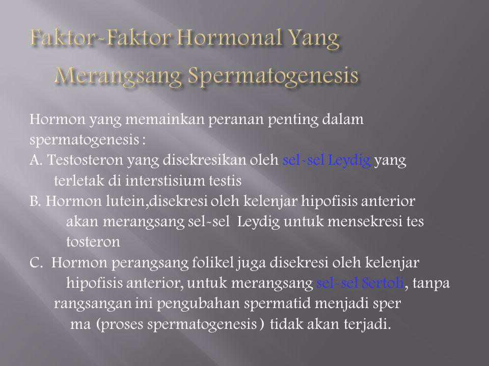 Faktor-Faktor Hormonal Yang Merangsang Spermatogenesis